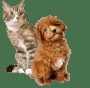 ボタン左の犬猫